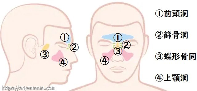 副鼻腔炎の場所