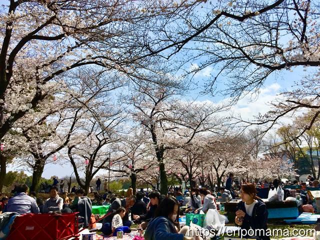 浮間公園 お花見