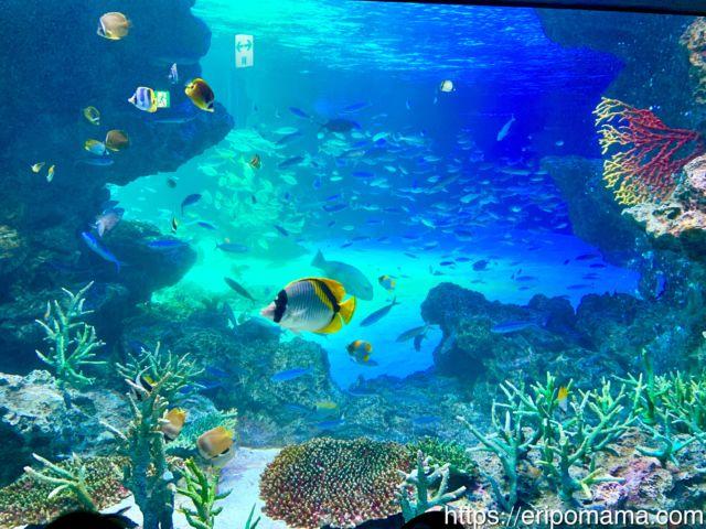 サンシャイン水族館 水槽の魚